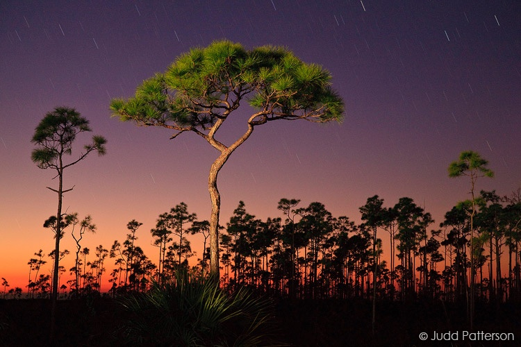 Last Light on the Pinelands, Everglades National Park, Florida, United States