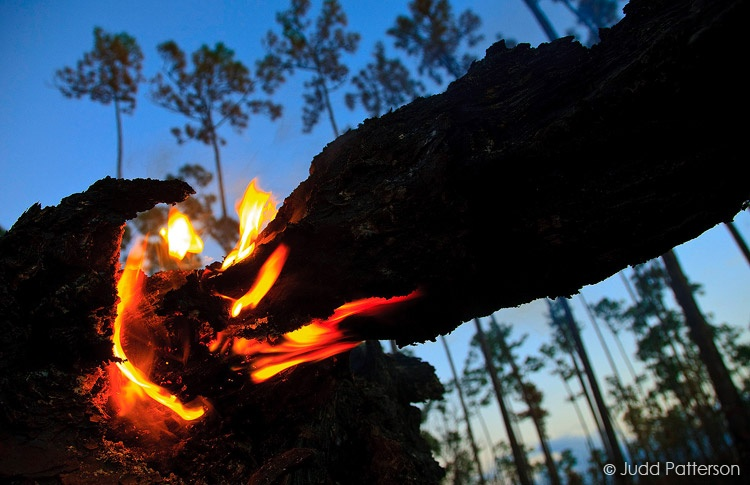 Pinelands on Fire, Everglades National Park, Florida, United States