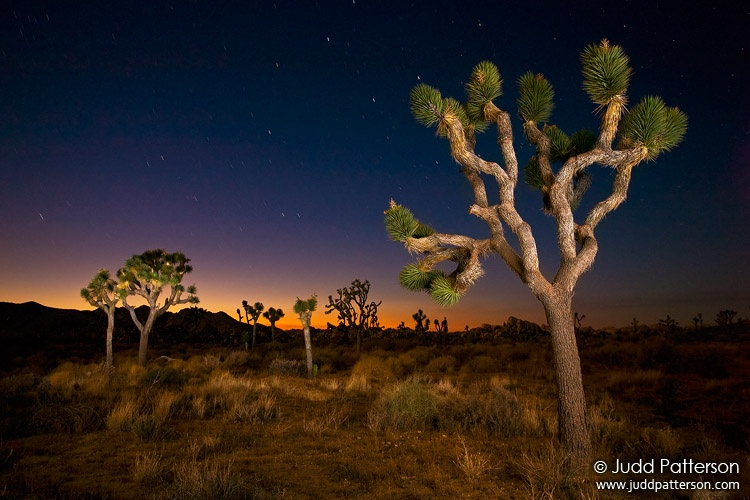 Joshua Tree Twilight, Joshua Tree National Park, California, United States