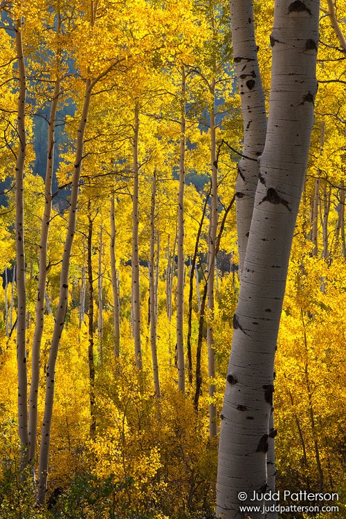 Backlit, White River National Forest, Colorado, United States