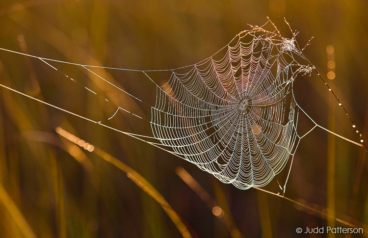 Dewy Web, Everglades National Park, Florida, United States