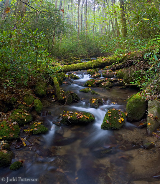 Life in Motion, Great Smoky Mountains National Park, North Carolina, United States