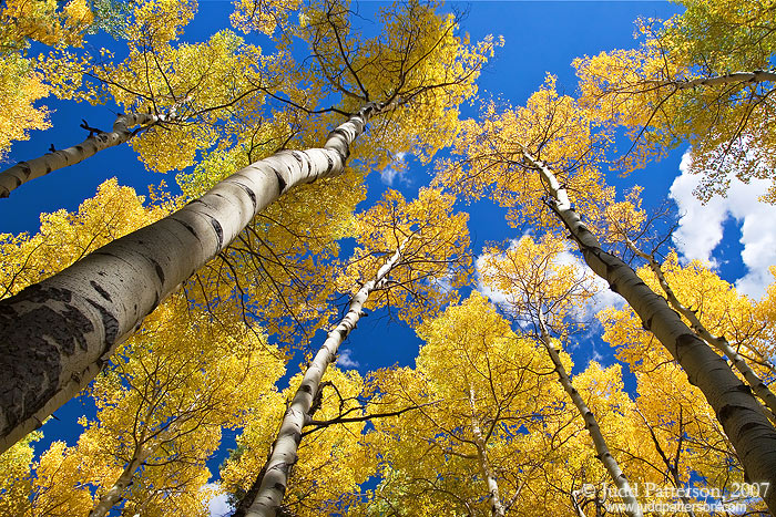 Up Through the Aspens, Rocky Mountain National Park, Colorado, United States