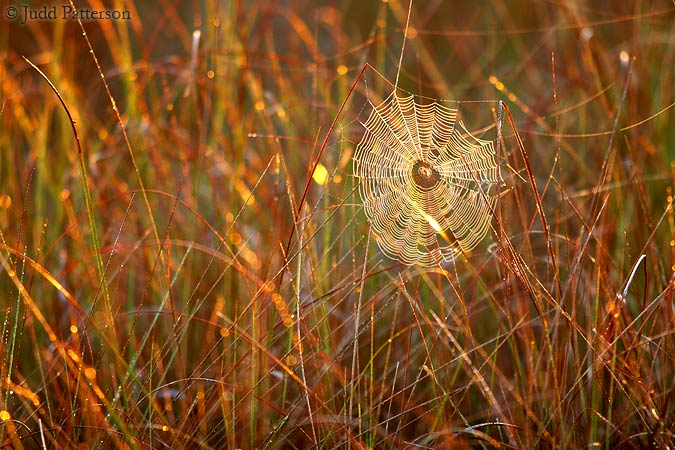 Dewy Dawn, Everglades National Park, Florida, United States