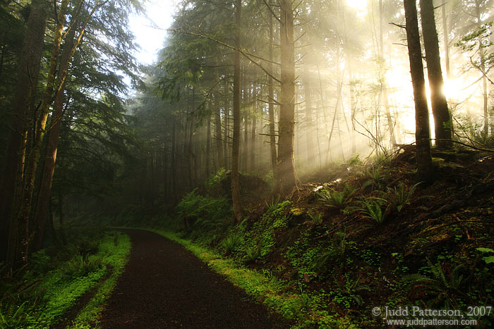 Ancient Forest, Ecola State Park, Oregon, United States