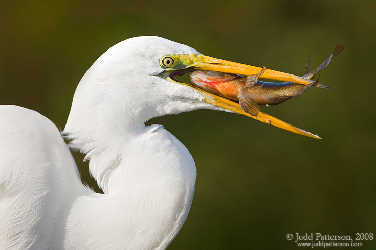 Breakfast, Everglades National Park, Florida, United States