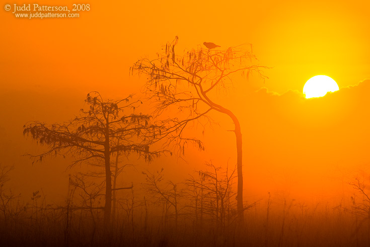 Rising Sun, Everglades National Park, Florida, United States