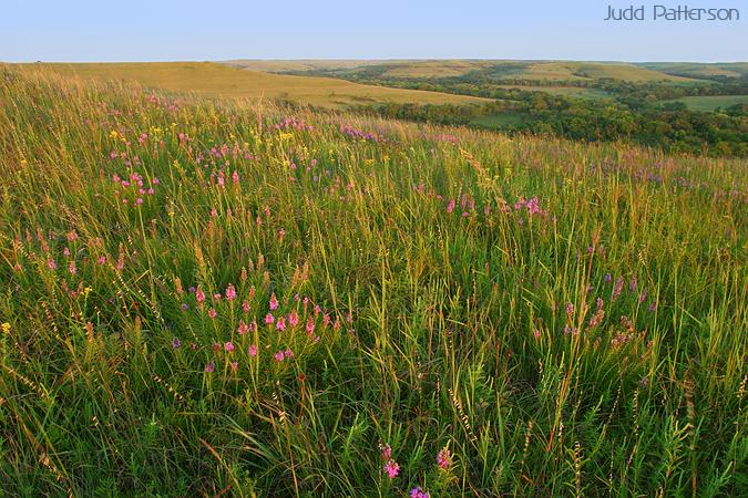 Late season flowers and grass on the prairie, Konza Prairie, Kansas, United States