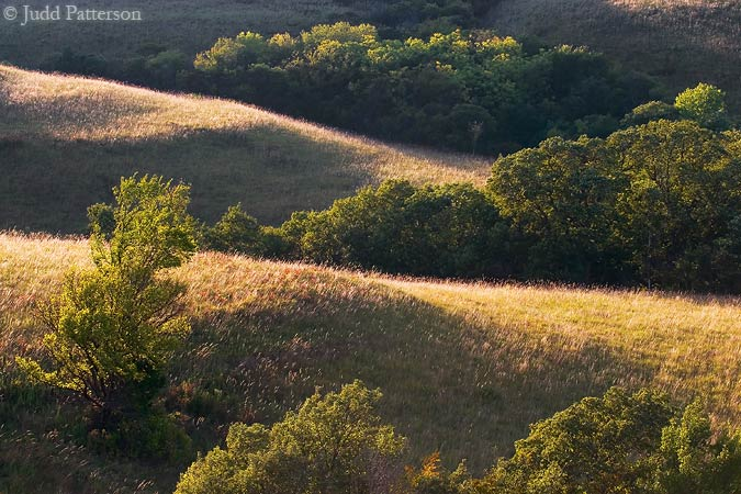 Afternoon Light, Konza Prairie, Kansas, United States