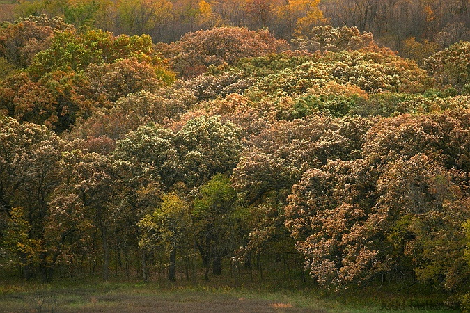 Muted Fall Colors, Konza Prairie, Kansas, United States