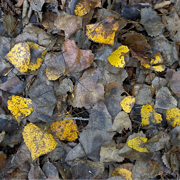 Forest Floor, Lakewood Park, Kansas, United States