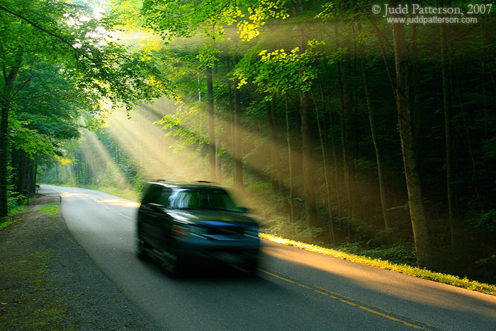 Morning Drive, Great Smoky Mountains National Park, Tennessee, United States
